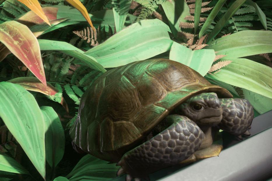 ГАЛАКТОПЕДИЯ: Лейлендская черепаха